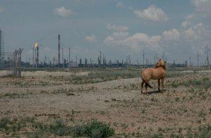 Caballos en el campo petrolero de Tengiz, que proporciona casi una cuarta parte del ingreso nacional de Kazajistán. Foto/ Nanna Heitmann para The New York Times.