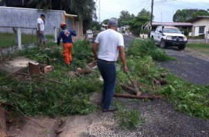 En Las Tablas varias vías resultaron bloqueadas por árboles que cayeron tras la lluvia. Foto: Thays Domínguez.