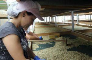 Chiapas, en el sureste de México, es uno de los principales estados productores de café del país.