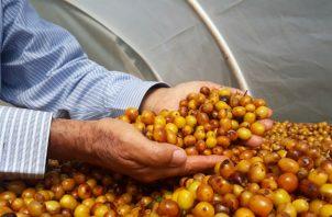 Buscan resaltar los valores de la calidad del café. Foto/Cortesía