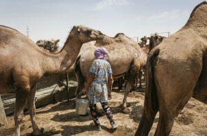 Kazajistán ha buscado una forma de poner fin a su dependencia del crudo. Foto/ Tara Todras-Whitehill para The New York Times.