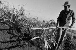 La agricultura desempeñada por nuestros sujetos campestres carece de tecnología. Foto: EFE.