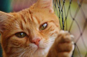 Seminario sobre gatos promete ser interesante. Este, con esos ojazos conquista.  Foto: Pixabay