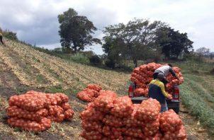 Se espera un contingente de 60 mil quintales de cebolla de Estados Unidos. Foto/Archivo
