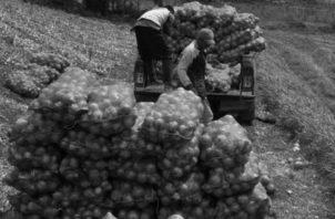 El consumidor no ha sentido la reducción en la canasta, no ve eso, solo escasez, como ha ocurrido con la cebolla por su alto precio. Foto: Archivo.