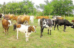 Se exportarán 200 toneladas de carne al mercado chino. Archivo