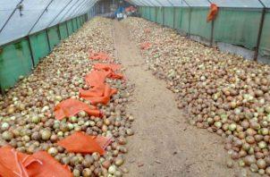 En la provincia de Chiriquí se informó que en estos momentos hay unos 10 mil quintales de cebolla, cuando el consumo mensual es de 55 mil quintales.