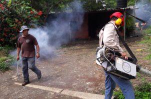 Los insecticidas solo eliminan parte de los mosquitos adultos.
