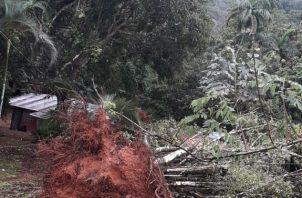 Personal del Sistema Nacional de Protección Civil (Sinaproc) se trasladó al lugar a hacer las evaluaciones y cortar los árboles.