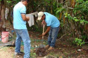 Datos de la entidad indican que este mes se realizarán unos 263 cortes en los distritos de Chitré, Ocú, Pesé y Santa María. Foto/Thays Domínguez