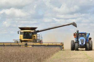 La producción de cereales, leguminosas y oleaginosas el próximo año supone un leve retroceso