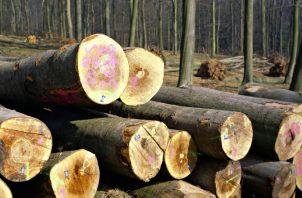 El Ministerio de Ambiente reveló que el 97% de la madera que se ha sacado de la provincia de Darién se ha hecho de manera ilegal.