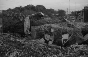 La tala de árboles para la construcción de viviendas, carreteras y otros proyectos de desarrollo vial, representan un atentado contra el equilibrio ecológico. Foto: Epasa.