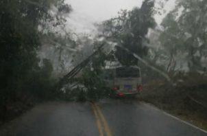 Los derrumbes se generaron debido a las constantes lluvias. Foto: José Vásquez.