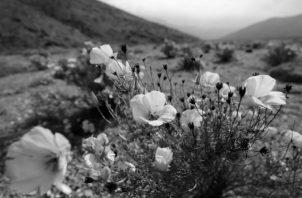 Siembran con la esperanza de la cosecha del mañana. Foto EFE.