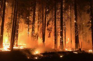 """El incendio bautizado como """"Camp Fire"""" comenzó el pasado 8 de noviembre y ha engullido por completo la localidad de Paradise, de 26.000 habitantes, y destruido más de 13.000 edificios."""
