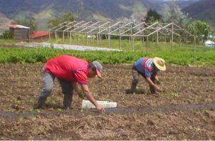 El sector agropecuario aporta al producto interno bruto del país 1.9 por ciento. Archivo