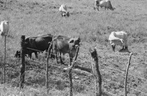 Se requiere que los funcionarios hagan visitas periódicas a las fincas para saber la condición de los animales y de los cultivos. Foto: Archivo. Epasa.
