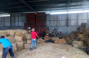 La galera albergaba unas 300 pacas para alimentar el ganado, y al menos la mitad fueron consumidas por las llamas. Foto/Thays Dompinguez