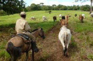 Los ganaderos advierten que se mantendrán vigilantes ante cualquier acción que realicen o hayan realizado los negociadores panameños.