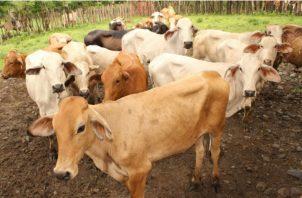 El año pasado el precio de la carne disminuyó un 12 por ciento. Archivo
