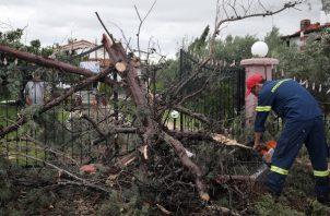 - Un bombero corta un árbol que los fuertes vientos arrasaron en Sozopolis, Chalkidiki, norte de Grecia. FOTO/AP