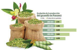 El guandú nacional es uno de los productos preferidos por los panameños