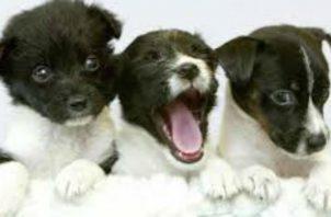 """Convertía a los cachorros y perros en """"mulas"""". Foto: EFE/Ilustrativa."""
