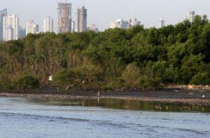 Hay humedales panameños que son protegidos por convenios internacionales. Foto de archivo
