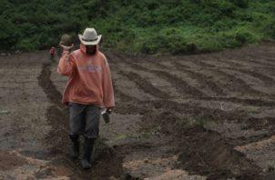 El sector agropecuario es una de las actividades que ha caído significativamente en los últimos años. Foto: Archivo