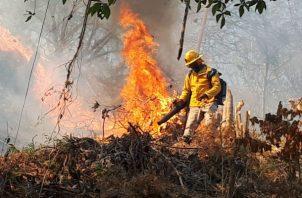 Los incendios forestales han devastado cientos de hectáreas en provincias como Darién y Chiriquí.