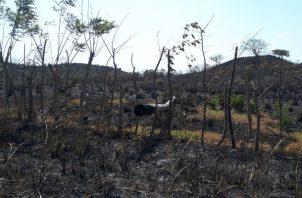 Los bomberos tratan de controla r el incendio forestal que se originó desde el viernes. Foto/Thays Domínguez