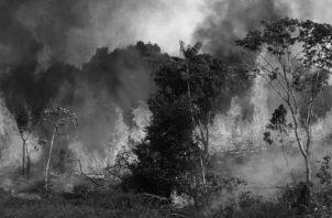 Según cifras del Instituto Nacional de Investigación Espacial del Brasil (INPE), en la Amazonía se han detectado 72.843 incendios desde enero de 2019, lo que representa un aumento del 83% en comparación con los registrados en 2018. Foto: EFE.