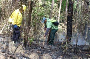 Bomberos y personal de MiAmbiente combatiendo el incendio. Foto: Víctor Eliseo Rodríguez.