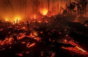 Miles de incendios arden en Indonesia, la mayoría provocados para desmontar terreno para cultivo. Foto/ Ulet Ifansasti/Getty Images.