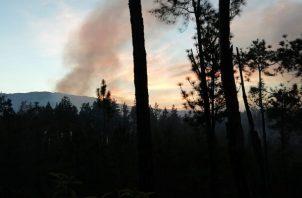 Bomberos rgistran más de 200 atenciones por incendio de masa vegetal. Foto/MiAmbiente