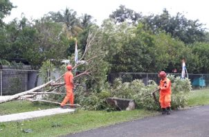 Los moradores quedaron parcialmente incomunicados, y sin fluido eléctrico por varias horas, debido a la caída de los árboles. Foto/ Thays Dominguez