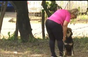 La persona señalada de haber herido al animal negó lo sucedido y dijo que no tiene nada que ver con las heridas que mantiene el perro. Foto/Mayra Madrid