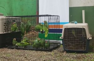 Los animales fueron encontrados algunos en jaulas.. Foto: Mayra Madrid.