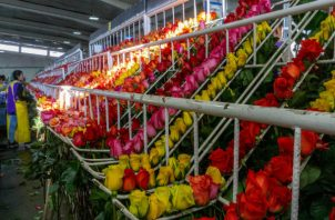 Se estima que 89 millones de flores pasarán este año por el Aeropuerto Internacional de Miami. Foto: EFE.
