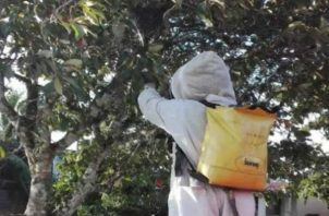 El ataque de las abejas africanizadas fue en la casa de las personas. Foto: Mayra Madrid.