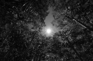 Los árboles sufren las dolencias de ser cortados y quemados cumpliendo así las infamias desagradables, heredadas de las venideras generaciones. Foto: Archivo.