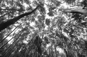 No hay control, no hay autoridad que detenga este terrible mal, la tala indiscriminada de árboles y la destrucción de vida silvestre, lo que traerá sus consecuencias. Foto: Archivo Epasa.