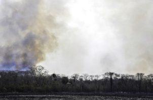 El incendio en la zona del Pantanal ha quemado 37.000 hectáreas de bosques. Foto: EFE.