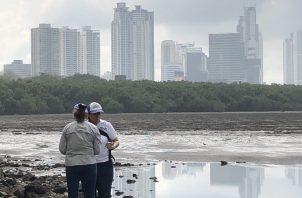 Mortandad de peces en la bahía de Panamá.