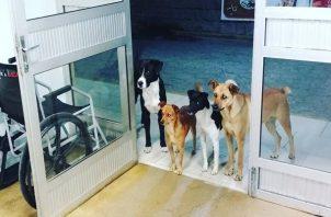 Viral: Cuatro perros esperan a su amo fuera de un hospital en Brasil. Foto: Redes Sociales.