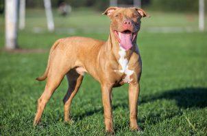 Buscan que dueños de canes paguen seguros. Archivo