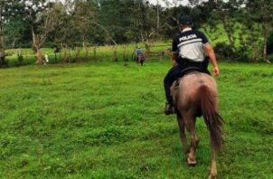 Policía Nacional patrulla a caballo en fincas de Panamá Norte. Foto/Cortesía