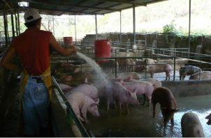 El Mida busca proteger la producción nacional de la Peste Porcina Africana.