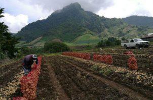 El pago a los productores se hará este fin de semana en la ciudad de Santiago de Veraguas.
